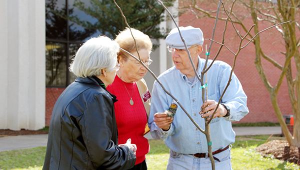 Photos by Alex Jacks / In honor of Arbor Day, the Lincoln County Master Gardeners club planted a forest pansy redbud tree in front of the court house.