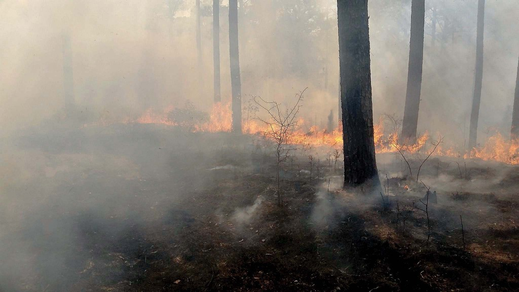 Photo submitted. The 832 acre Burn Block 42SW in Homochitto National Forest going through a prescribed burn on Feb. 7.