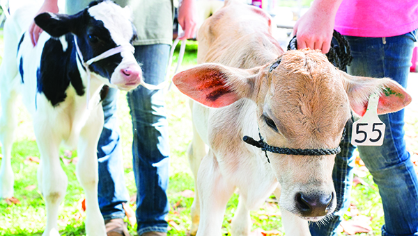 File photo / The Brookhaven Farmers Market is scheduled to return downtown on June 3. The annual Dairy Day will be held June 10.