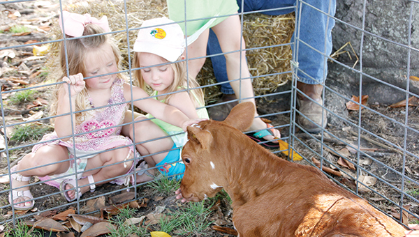 Photos by Alex Jacks/Ard's Dairy Farm brought a pair of wdairy calves to the Brookhaven Farmers' Market in Railroad Park Friday in celebration of Dairy Day.