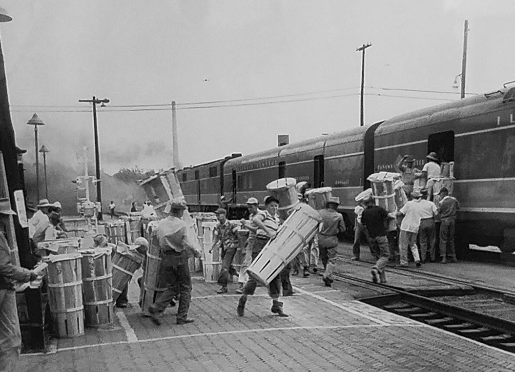 Photo submitted/Workers load gladiolas s onto the Panama Limited for shipment to wholesale florists in Chicago in the late 1940s. About 10 growers, including Frank Burns, sometimes had over 300 hampers that had to be loaded onto the train in less than five minutes. The white squares on the platform designated which flowers went to which of the various stops. The closest cities' shipments were loaded last.