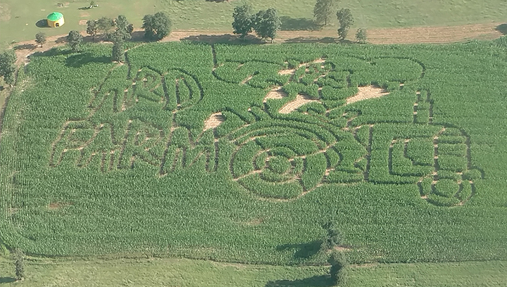 Photo submitted/Ard's Dairy Farm offers maze tours every Saturday in October from 10 a.m. to 4 p.m. and 6 p.m. to 9 p.m.