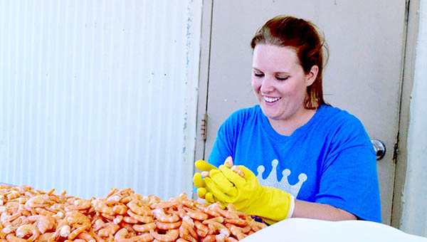 Photo by Julia Miller/Natalie Ybarra, Junior Auxiliary second vice president of finance, sorts through shrimp Wednesday to ensure only the best make it on the plates at the 29th annual Peel 'Em and Eat 'Em Shrimp Dinner, which is today from 3 to 7 p.m. at Brookhaven Recreation Department. A limited number tickets will be available on a first come, first served basis. The dinner is the only fundraiser JA holds to support their various service projects, ranging from scholarships and clothes closets at local schools to Wish Tree and Smile Games.